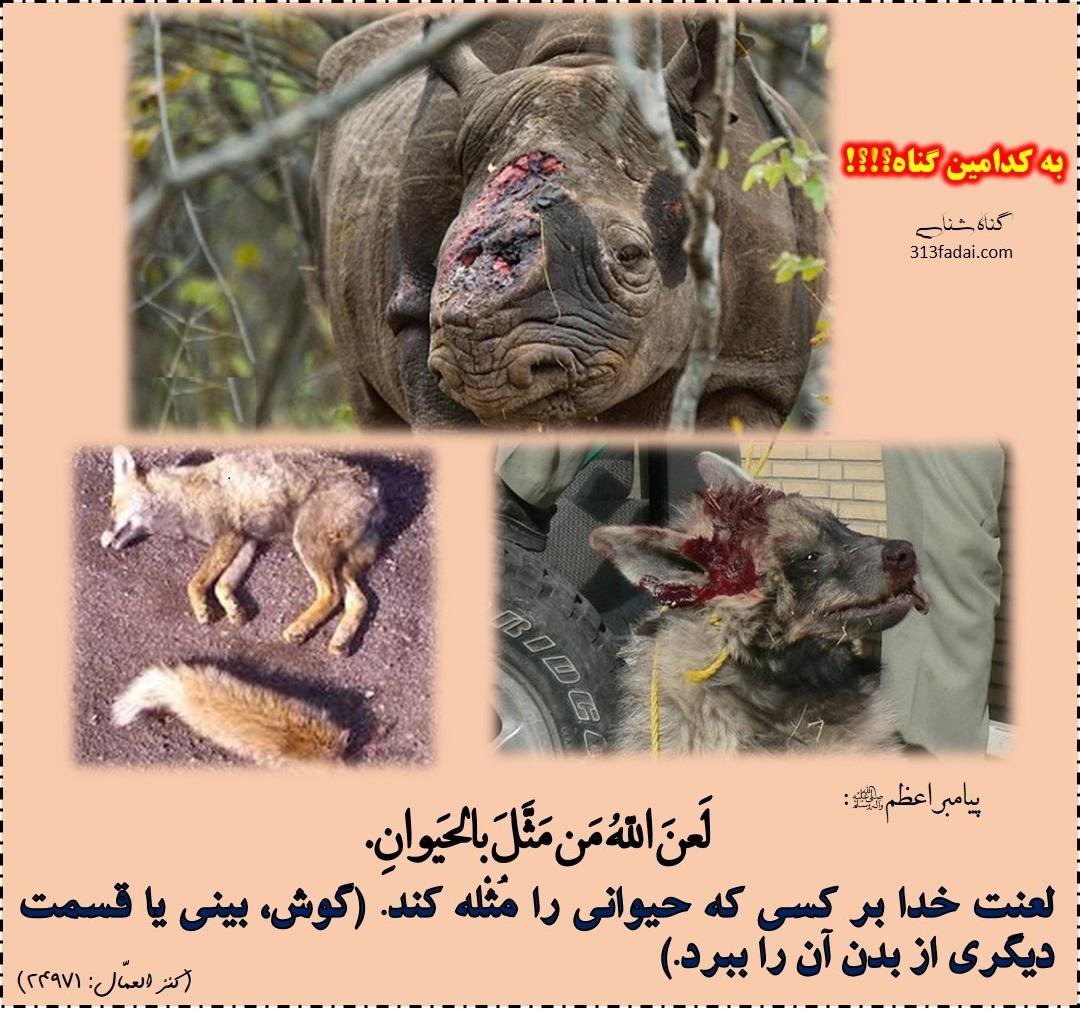 لعنت خدا بر کسی که حیوانات را مثله می کند